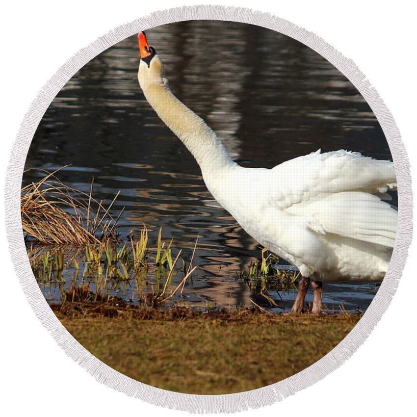 Movement Round Beach Towel featuring the photograph Relaxed Swan by Heike Hultsch