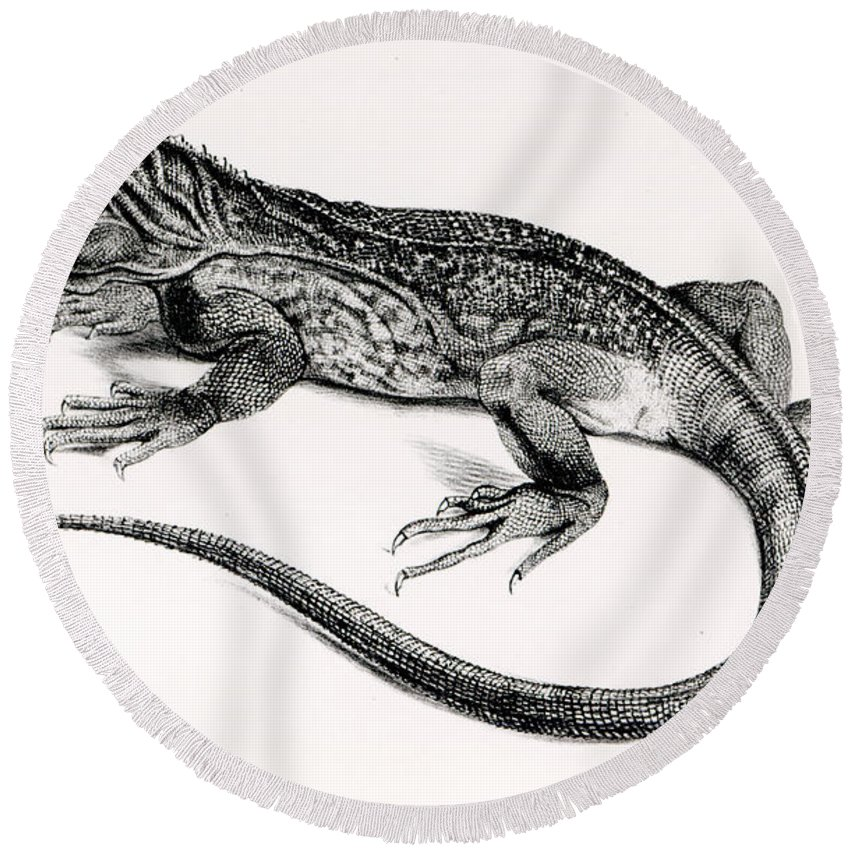 Lizard Round Beach Towel featuring the painting Reptile by English School
