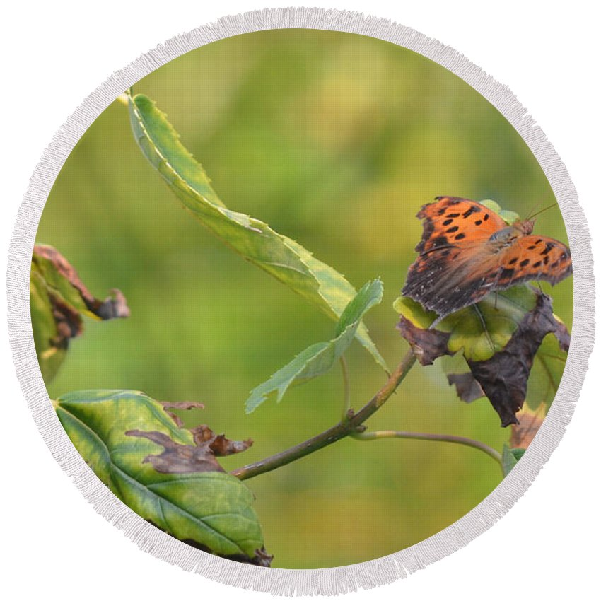 Butterfly Round Beach Towel featuring the photograph Resting Butterfly by K Conway