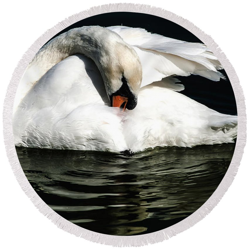 Mute Swan Round Beach Towel featuring the photograph Resting Swan by Norman Johnson