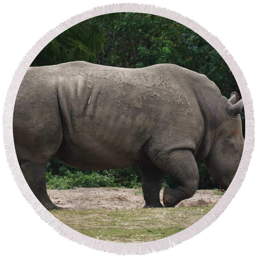 Rhino Round Beach Towel featuring the photograph Rhino In The Wild by Richard Booth