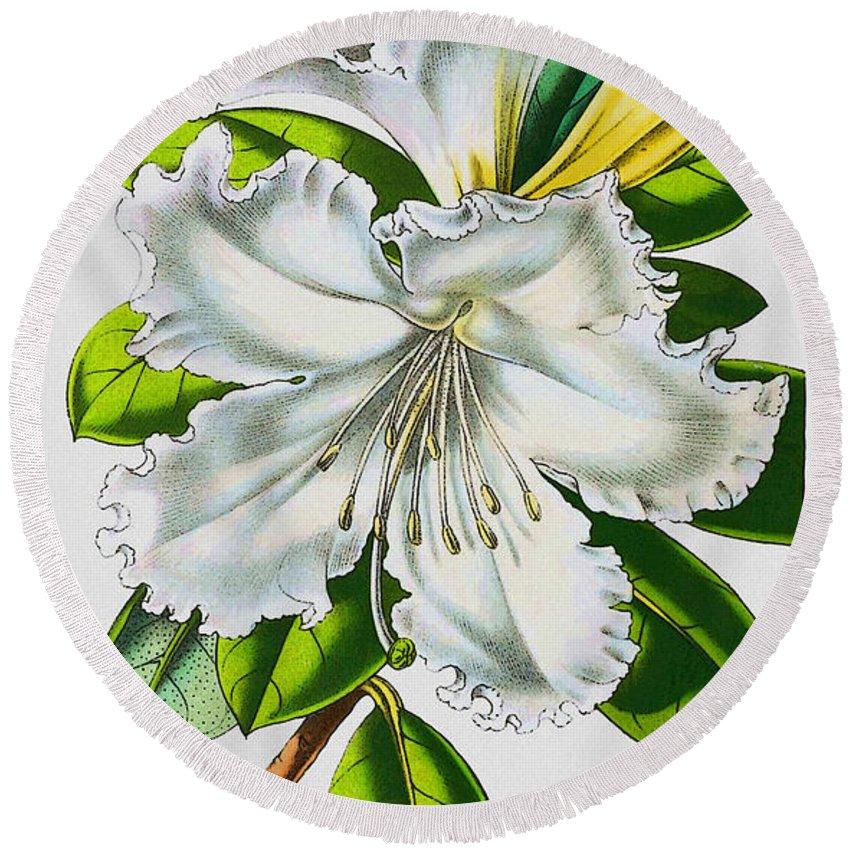 Rhododendron Round Beach Towel featuring the digital art Rhododendron Veitchianum by Joy McKenzie