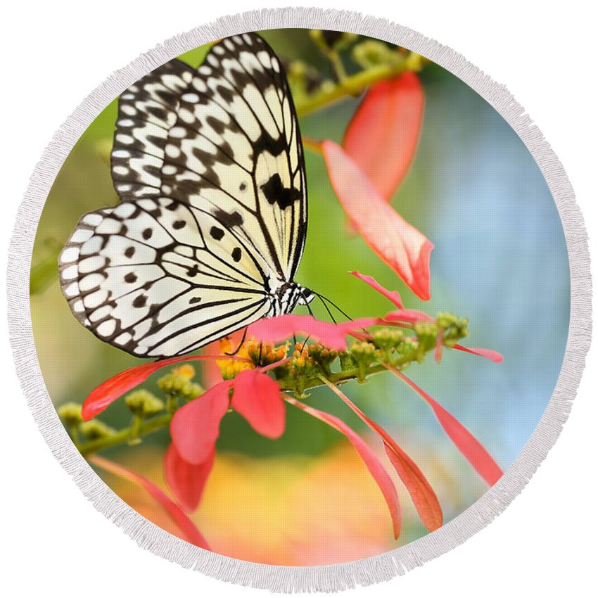 Macro Round Beach Towel featuring the photograph Rice Paper Butterfly In The Garden by Sabrina L Ryan