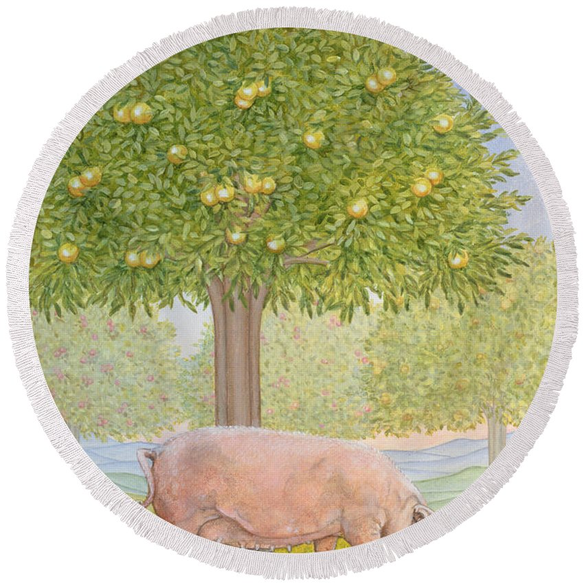 Lemon Tree Round Beach Towel featuring the photograph Right Hand Orchard Pig by Ditz