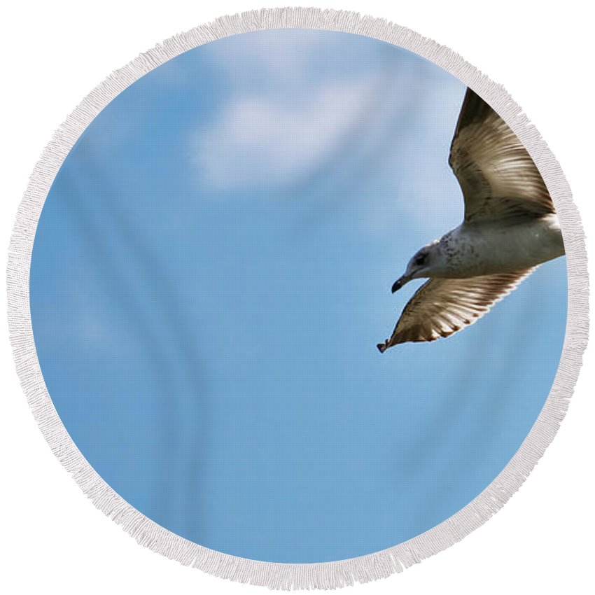 Florida Round Beach Towel featuring the photograph Ring Bill Gull by Mark Fuge