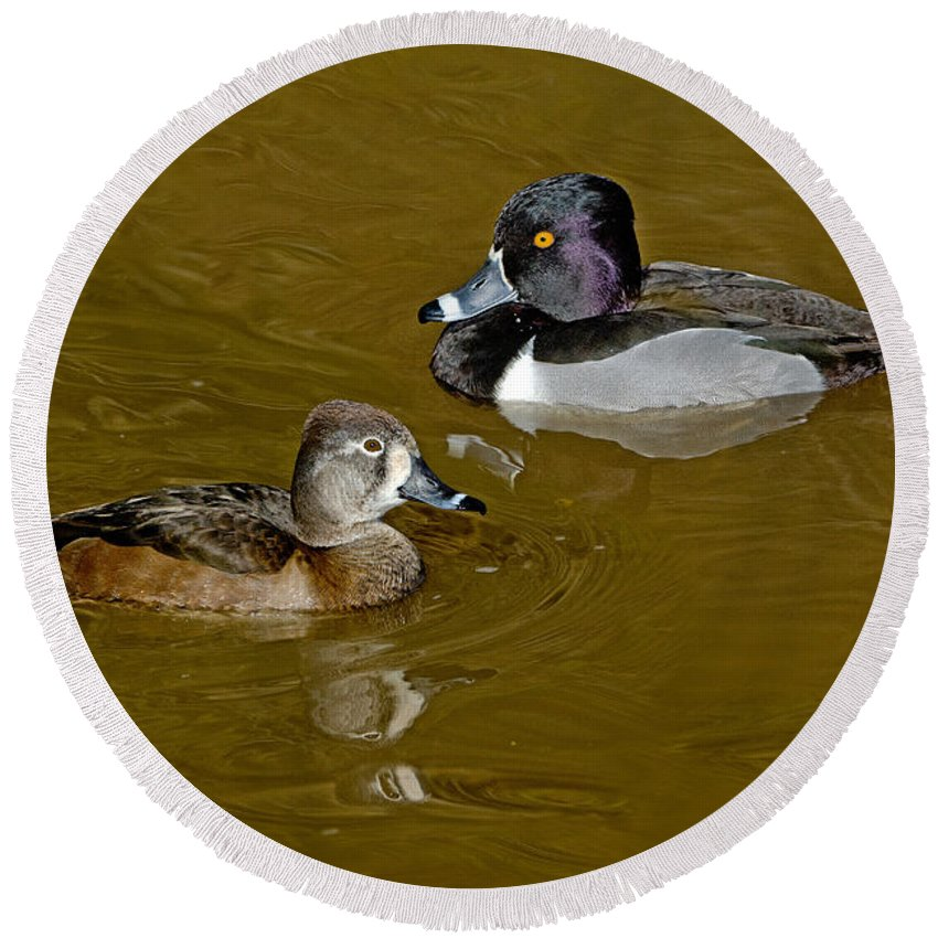 Nature Round Beach Towel featuring the photograph Ring-necked Duck Pair by Anthony Mercieca