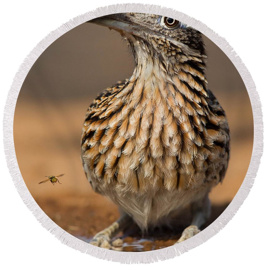 Greater Roadrunner Round Beach Towel featuring the photograph Greater Roadrunner No 1 by Jerry Fornarotto