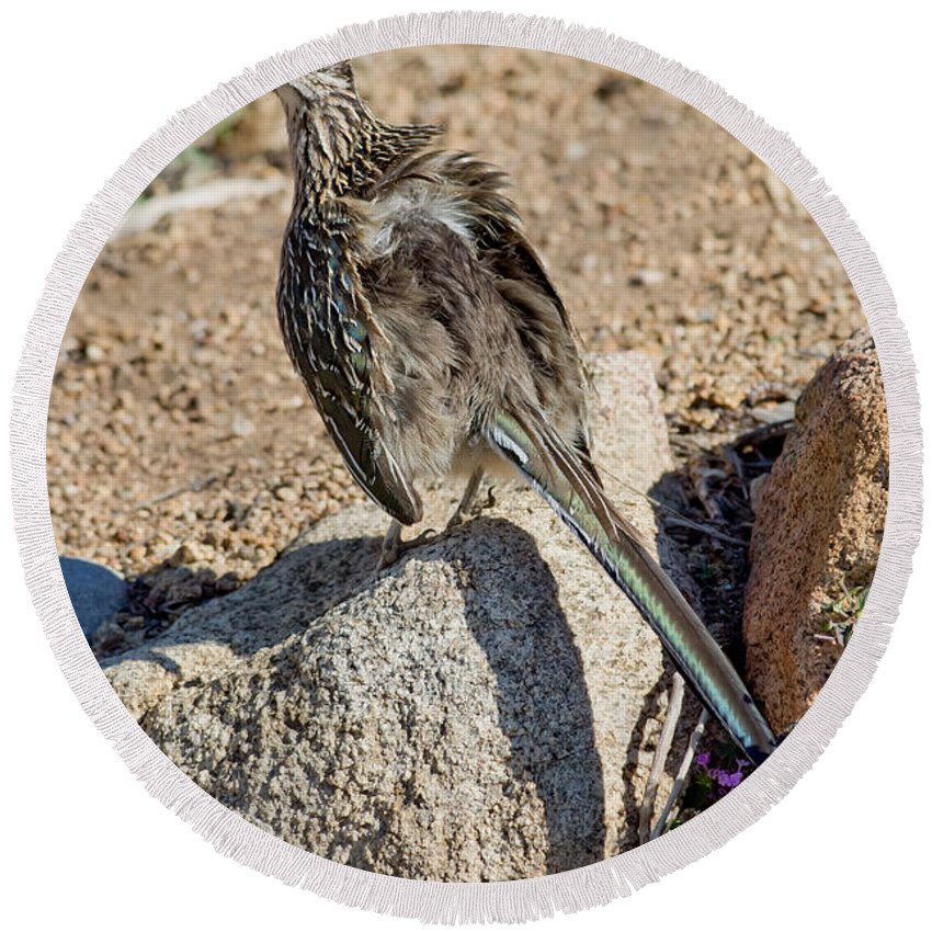 Animal Round Beach Towel featuring the photograph Roadrunner Sunning Atop Rock by Anthony Mercieca