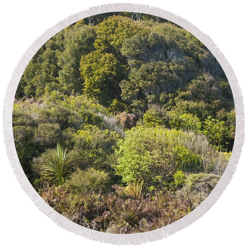New Zealand Forest Forests Tree Trees Plant Plants Landscape Landscapes Round Beach Towel featuring the photograph Roadside Forest Scenery by Bob Phillips