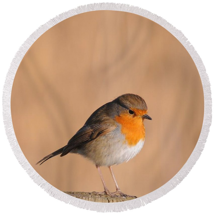 Robin Round Beach Towel featuring the photograph Robin by Jenny Potter