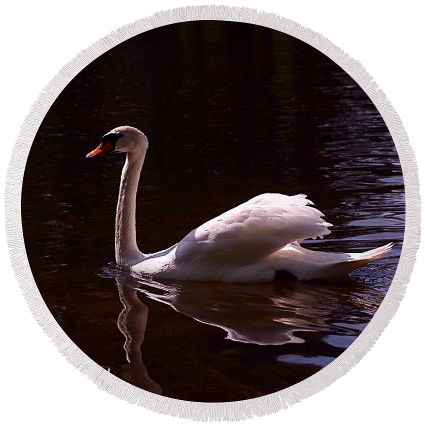 White Swan Round Beach Towel featuring the photograph Romeo Or Juliet by Rona Black