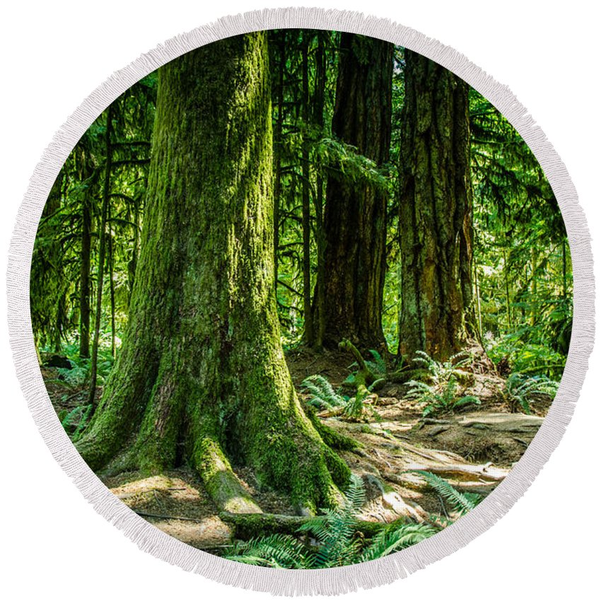 Old Growth Forest Round Beach Towel featuring the photograph Root Feet Collection 3 by Roxy Hurtubise