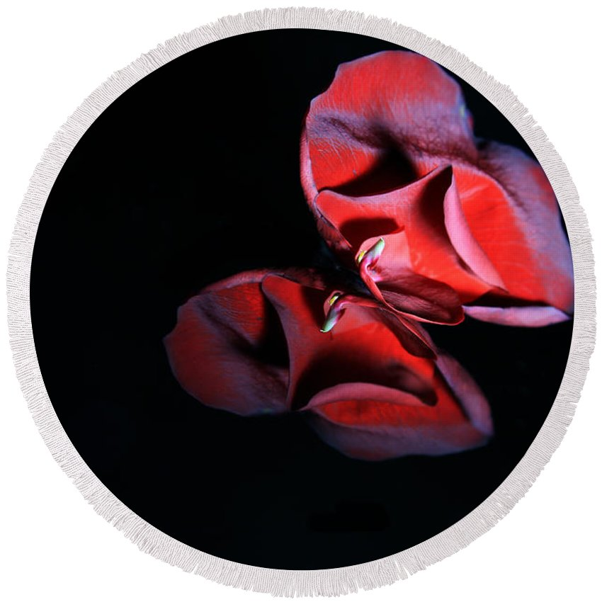 Rose Round Beach Towel featuring the photograph Rose 009 by Dawn Marshall