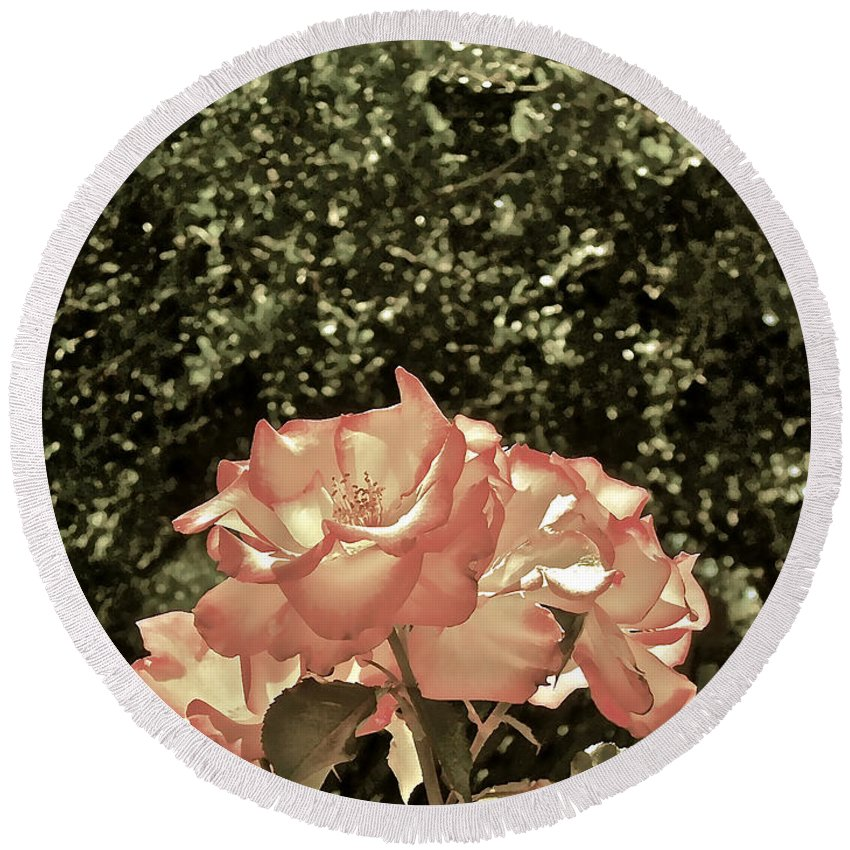 Flowers Round Beach Towel featuring the photograph Rose 55 by Pamela Cooper