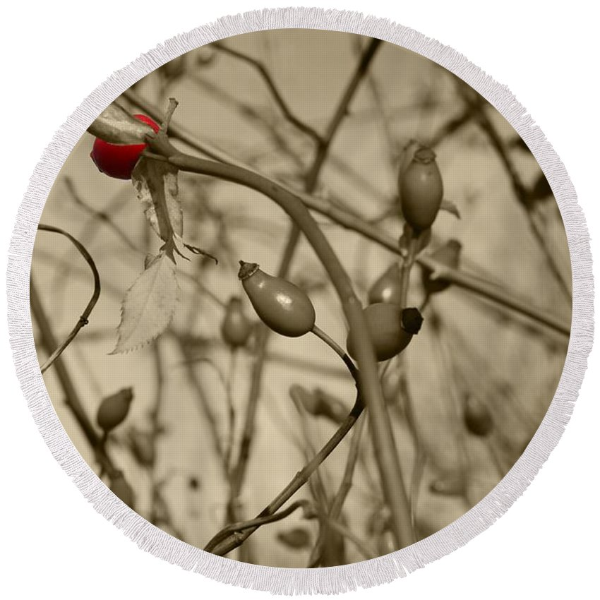 Rose Round Beach Towel featuring the photograph Rose Hips by FL collection