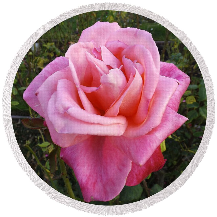 Roses Round Beach Towel featuring the photograph Rose by John Clarke