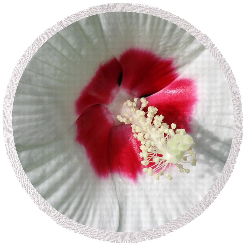 Rose Mallow Round Beach Towel featuring the photograph Rose Mallow - Honeymoon White With Eye 01 by Pamela Critchlow