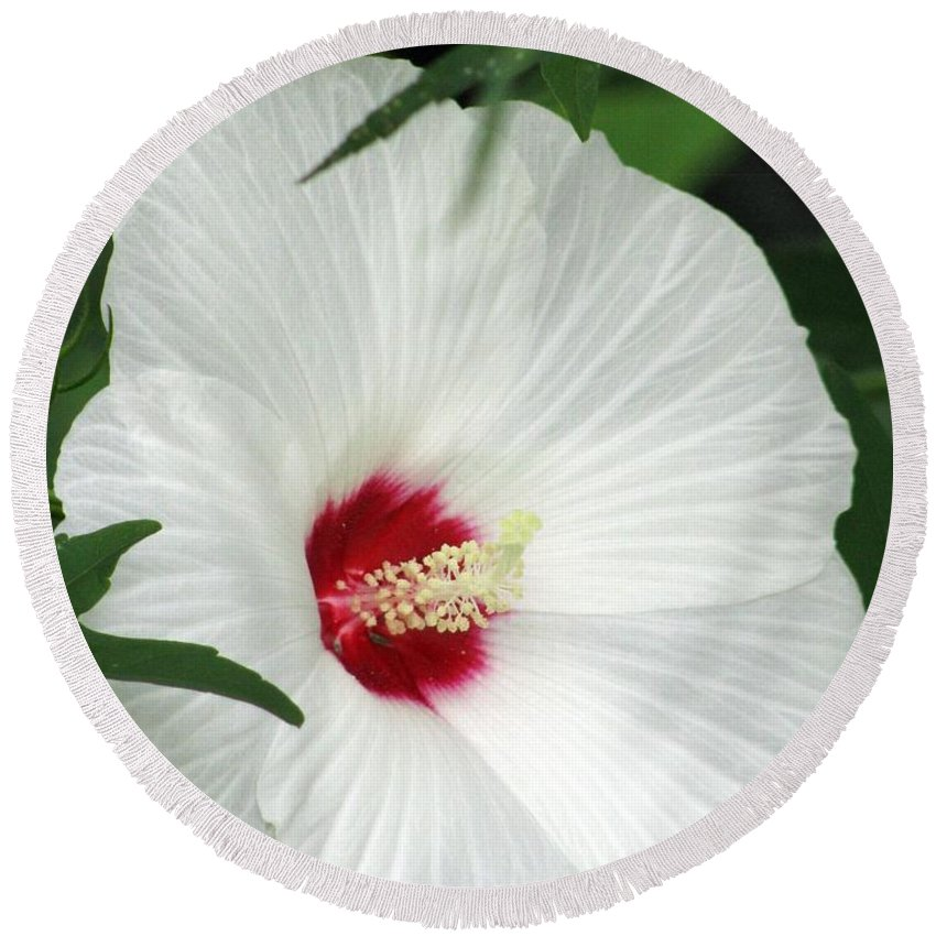 Rose Mallow Round Beach Towel featuring the photograph Rose Mallow - Honeymoon White With Eye 05 by Pamela Critchlow