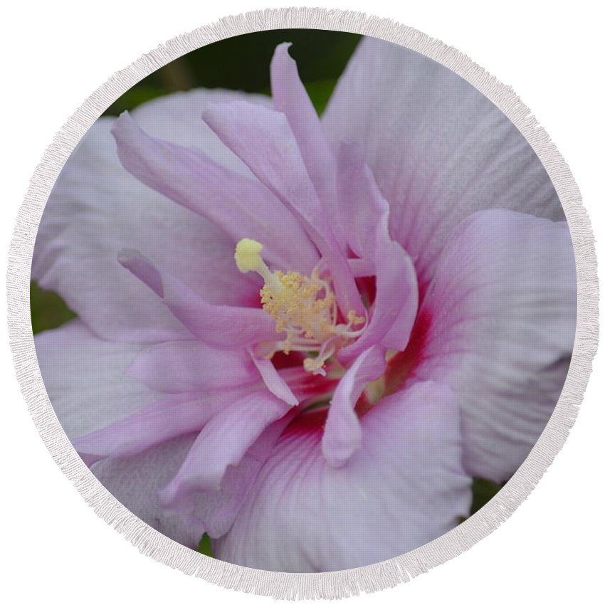 Rose Of Sharon 14-1 Round Beach Towel featuring the photograph Rose Of Sharon 14-1 by Maria Urso