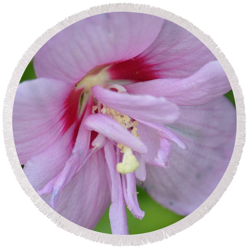 Rose Of Sharon 14-4 Round Beach Towel featuring the photograph Rose Of Sharon 14-4 by Maria Urso