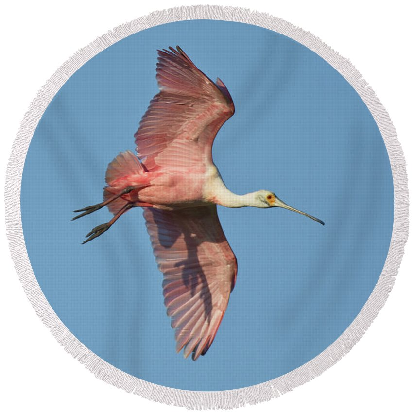 Roseate Spoonbill Round Beach Towel featuring the photograph Roseate Spoonbill by Anthony Mercieca