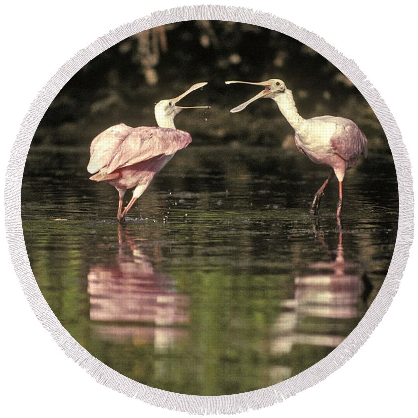Roseate Spoonbill Round Beach Towel featuring the photograph Roseate Spoonbill by Ron Sanford