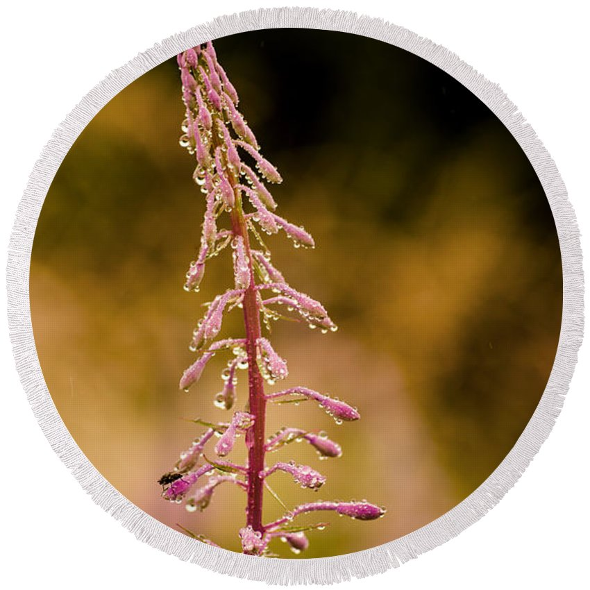 Plant Round Beach Towel featuring the photograph Rosebay Willowherb by Linsey Williams