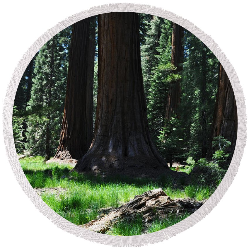 Sequoia National Park Round Beach Towel featuring the photograph Round Meadow Sequoia Family by Kyle Hanson