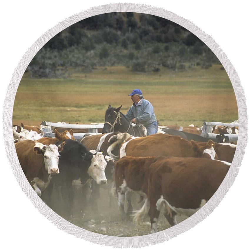 Cowboy Round Beach Towel featuring the photograph Cattle Round Up Patagonia by James Brunker