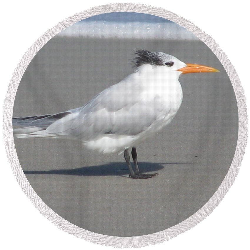 Landscape Round Beach Towel featuring the photograph Royal Tern Seafoam by Ellen Meakin