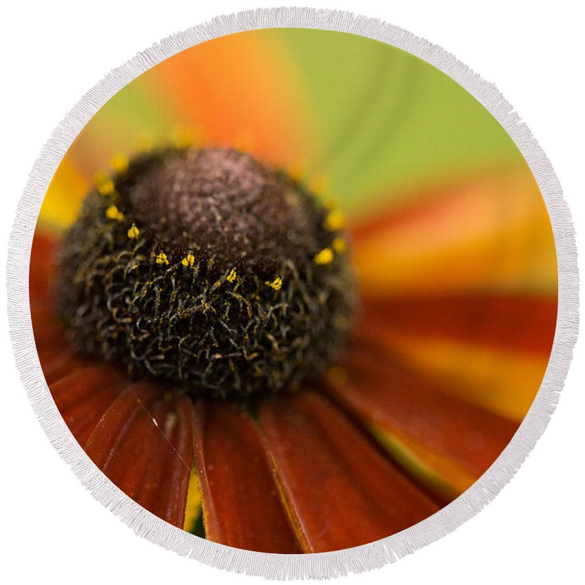 Flowers Round Beach Towel featuring the photograph Rudbeckia by Liz Alderdice