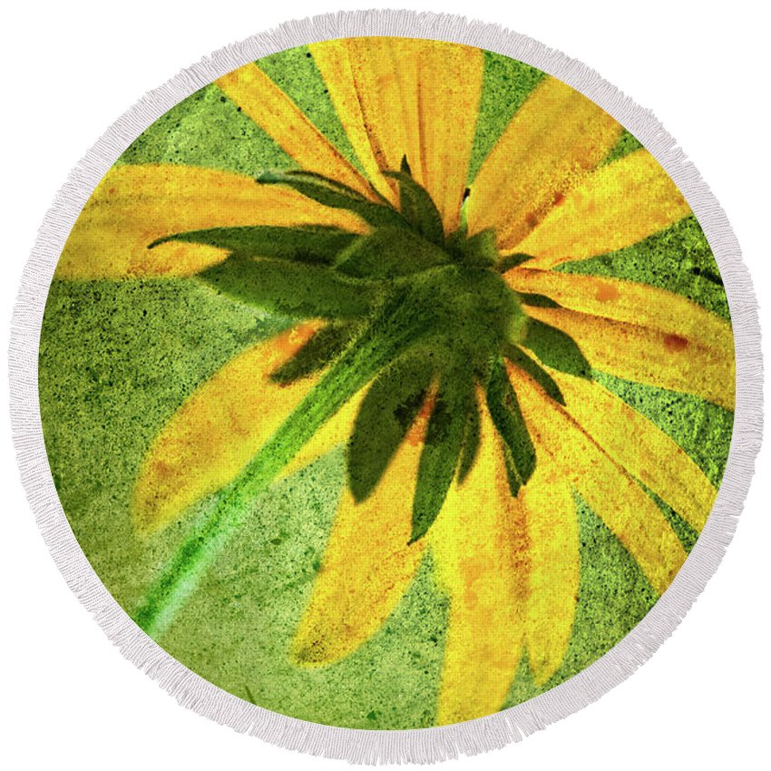 Black-eyed Susan Round Beach Towel featuring the photograph Rudbeckia On Cement by Onyonet Photo Studios