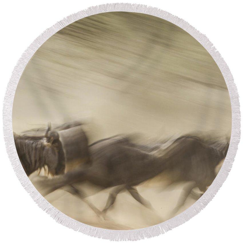 Wildebeest Round Beach Towel featuring the photograph Running Wildebeest I by Boyd Norton