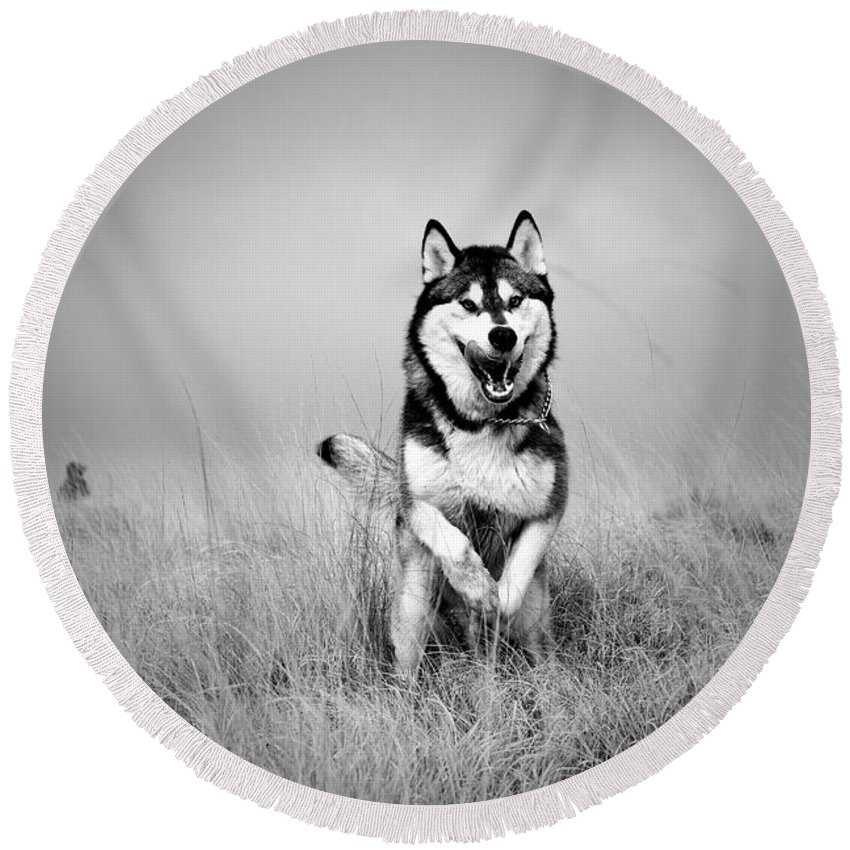 Action Round Beach Towel featuring the photograph Running Wolf by Mike Taylor