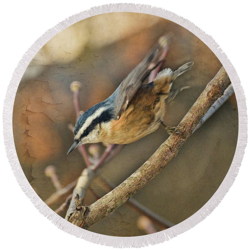 Nature Round Beach Towel featuring the photograph Runway Clear For Takeoff  Redbreasted Nuthatch by Debbie Portwood