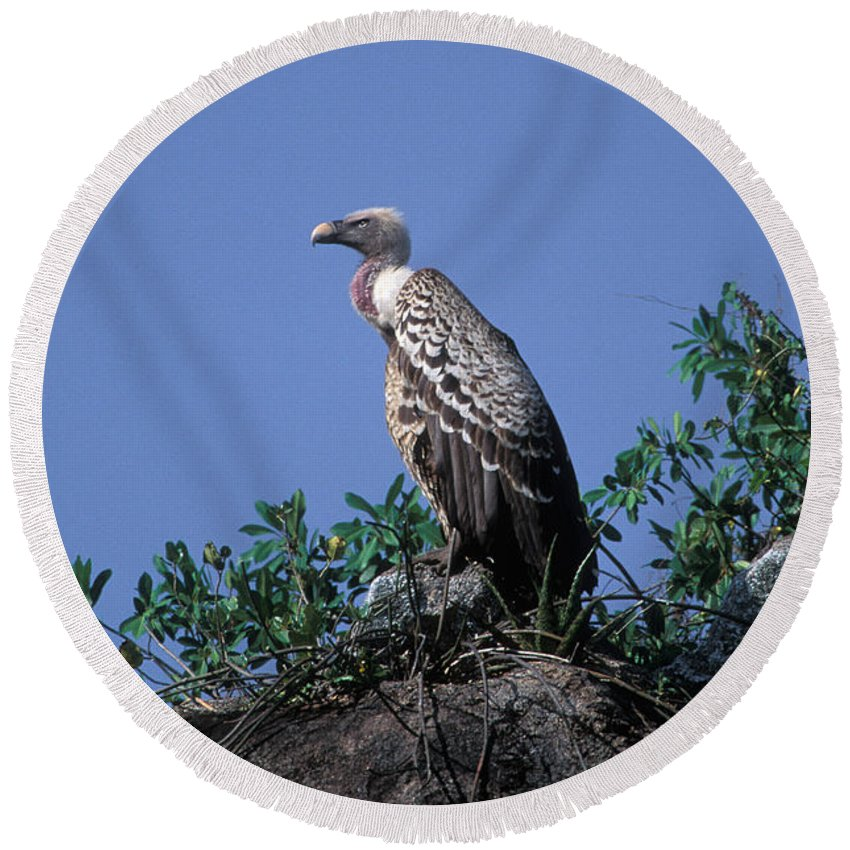 Animal Round Beach Towel featuring the photograph Ruppells Griffon Vulture by Ron Sanford