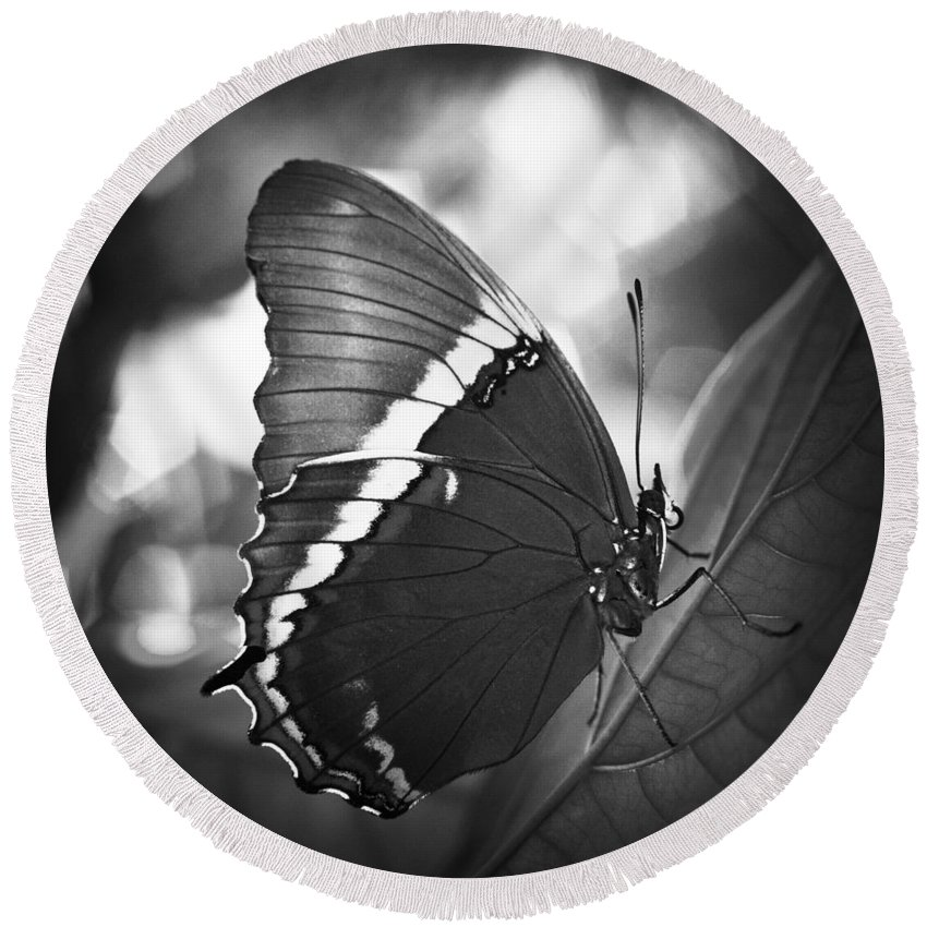 Florida Round Beach Towel featuring the photograph Rusty Tip Butterfly Black And White by Bradley R Youngberg