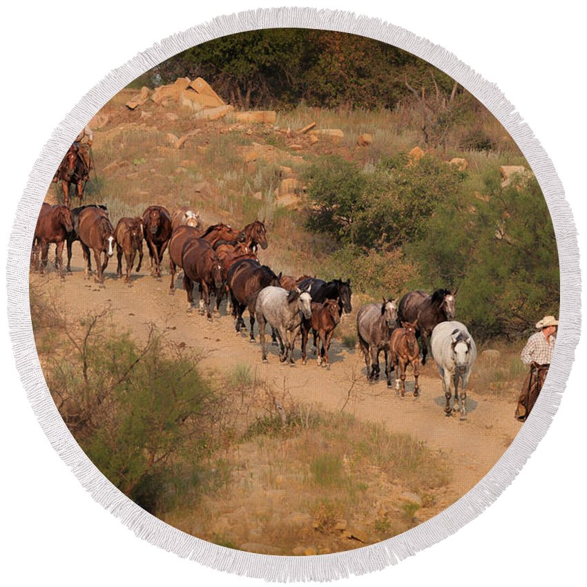 Horses Round Beach Towel featuring the photograph S Curve by Kelli Brown
