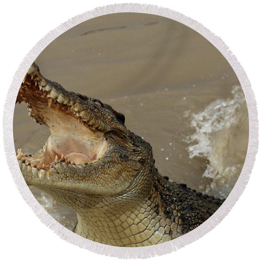 Salt Water Crocodile Round Beach Towel featuring the photograph Salt Water Crocodile 2 by Bob Christopher