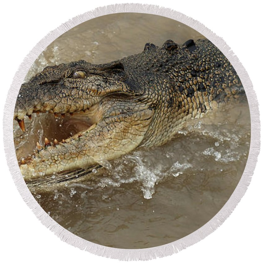 Crocodile Round Beach Towel featuring the photograph Saltwater Crocodile by Bob Christopher