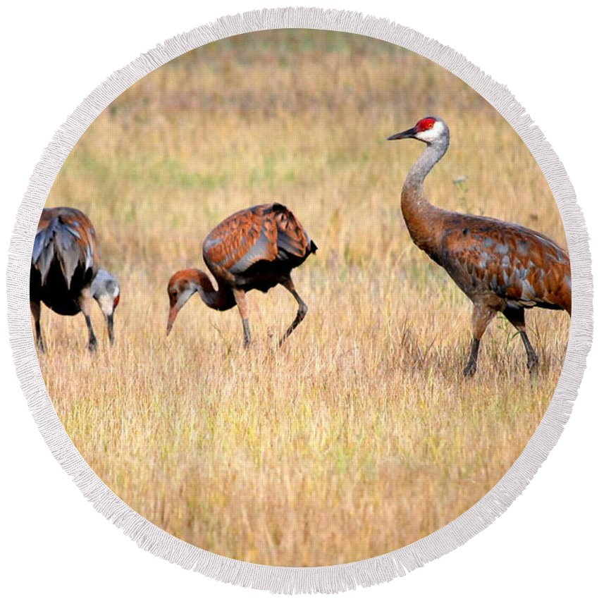 Bird Round Beach Towel featuring the photograph Sandhill Crane Family I by Kathy Sampson