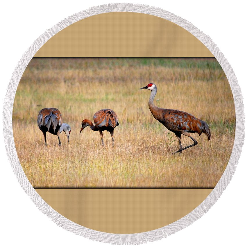 Bird Round Beach Towel featuring the photograph Sandhill Crane Family by Kathy Sampson