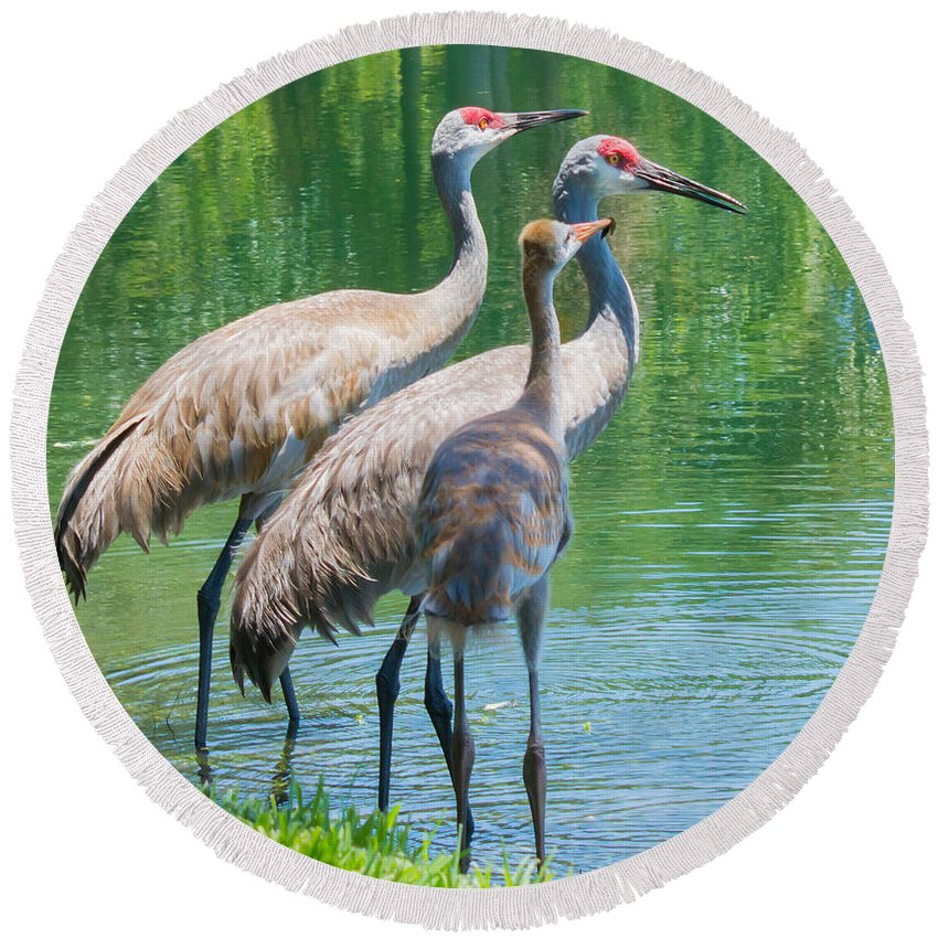 susan Molnar Round Beach Towel featuring the photograph Mom Look What I Caught by Susan Molnar