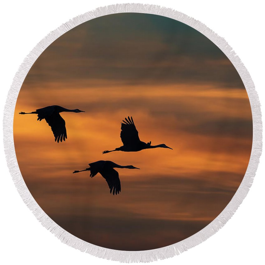 Bird Round Beach Towel featuring the photograph Sandhill Crane Sunset by Martin Belan