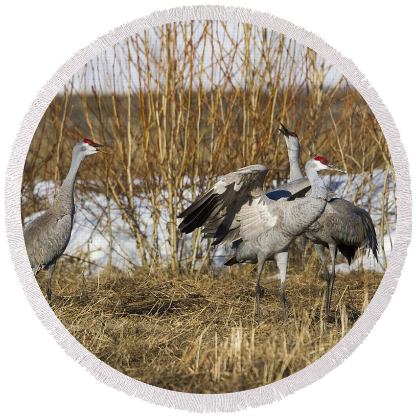 Doug Lloyd Round Beach Towel featuring the photograph Sandhill Cranes by Doug Lloyd