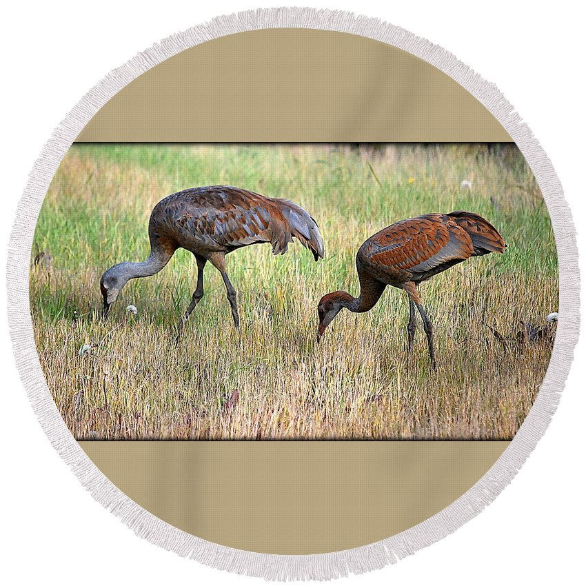 Bird Round Beach Towel featuring the photograph Sandhill Cranes I by Kathy Sampson