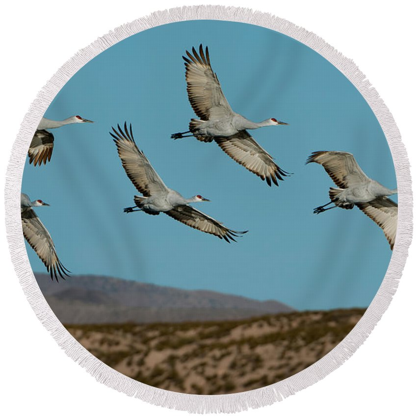 Sandhill Crane Round Beach Towel featuring the photograph Sandhill Cranes Over Chupadera Mountains by Anthony Mercieca