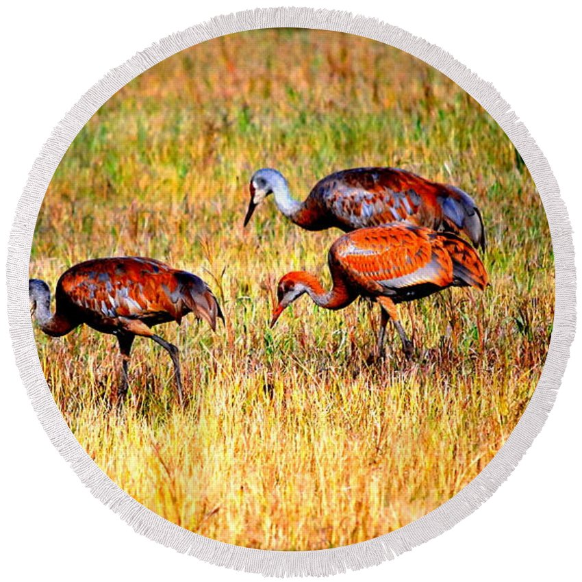Bird Round Beach Towel featuring the photograph Sandhill Family by Kathy Sampson