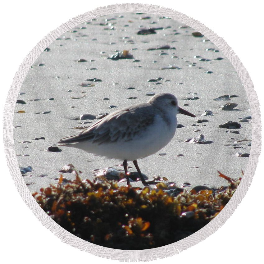 Landscape Round Beach Towel featuring the photograph Sandpiper And Seaweed by Ellen Meakin