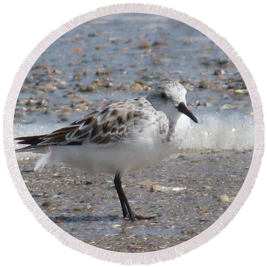 Landscape Round Beach Towel featuring the photograph Sandpiper And Shells by Ellen Meakin